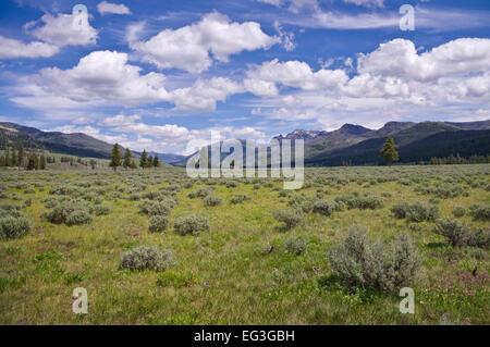 Afficher le long de Slough Creek Trail, le Parc National de Yellowstone, aux États-Unis.