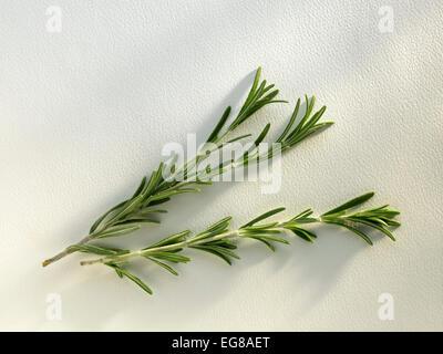 herbes: romarin Banque D'Images
