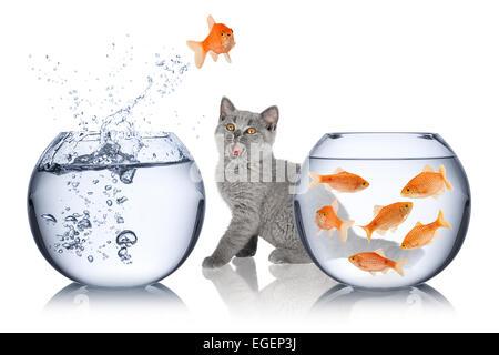 Les sauts d'un arc dans un autre en face de l'étonnement des cat Banque D'Images
