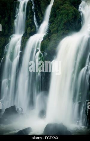 Avis de 'The Grand Fourwings Convention Das Cataratas', Foz do Iguaçu, Parque Nacional do Iguaçu, Brésil, Amérique Banque D'Images