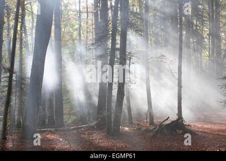 Forêt de Meydat, Parc Naturel Regional Livradois Forez, parc naturel régional du Livradois Forez, Condat-les-Montboissiers