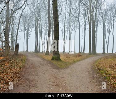 Dans la région côtière de chemin fourchue forêt de hêtres, Nienhagen, Westren Occidentale, Mecklenburg-Vorpommern, Banque D'Images