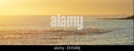 Manly surf Banque D'Images
