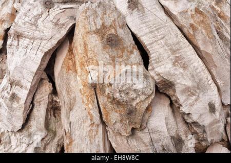 Le chevauchement des lambeaux d'éclats de bois de teck blanchi patiné détenus avec rusty nails Banque D'Images