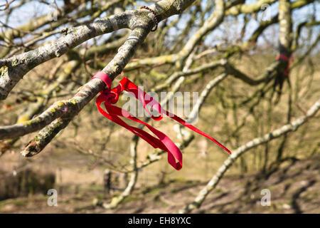 Avebury Wiltshire Angleterre un cercle en pierre comprend ce petit village du Wiltshire un chiffon attaché à un arbre, pour faire un voeu,