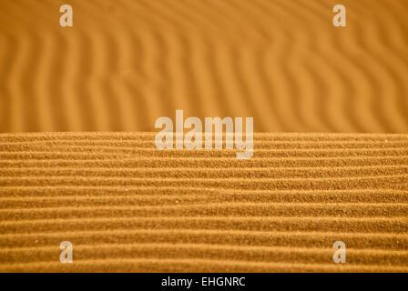 Le souffle du vent sur le sable des dunes de Kelso dans l'horizon d'or