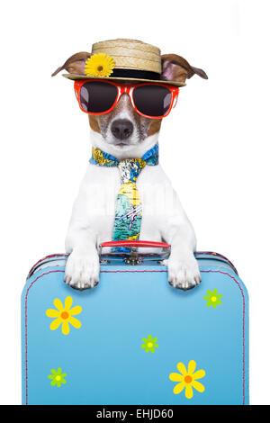 chien de vacances Banque D'Images