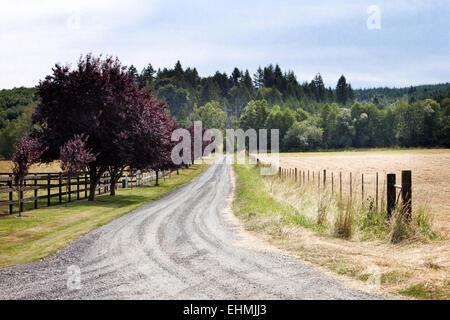 Chemin de terre entre les champs d'herbe in rural landscape Banque D'Images