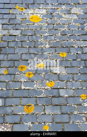 Lichen sur toit de tuiles d'ardoise en Ecosse Banque D'Images