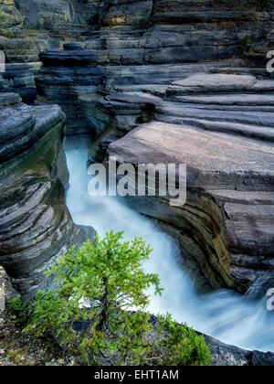 En cours d'Mystiya Canyon. Le parc national Banff, Alberta, Canada Banque D'Images