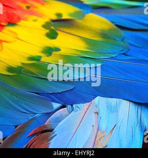 Bel oiseau plumes, plumes d'ara rouge motif de fond Banque D'Images