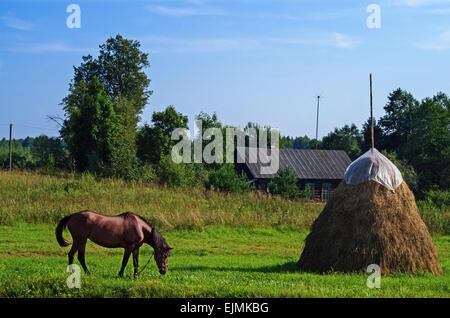 Paysage rural. Cheval brun et haystack au pâturage. Banque D'Images