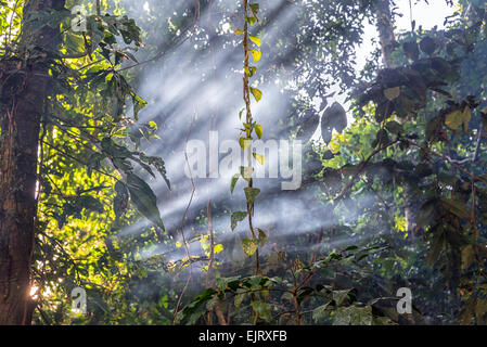 Des poutres comme passer à travers la fumée dans la forêt amazonienne près d'Iquitos, Pérou Banque D'Images