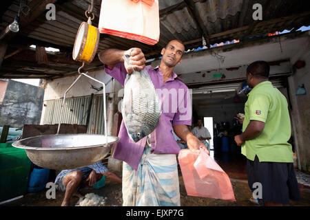 Marché aux poissons d'Unawatuna; LES PÊCHEURS DE LEUR PRISE DU JOUR Banque D'Images