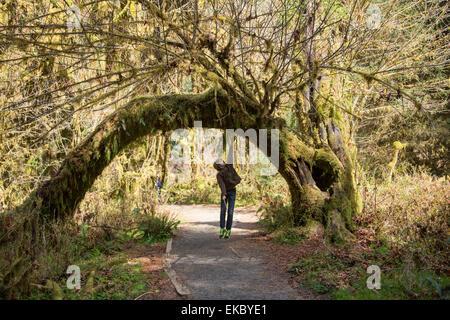 Le Parc National Olympique, Hoh Rainforest, Washington State, USA Banque D'Images