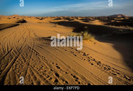 Plusieurs dunes de l'erg Chebbi dans le désert du sahara. ers sont formés par de grandes dunes de sable par le vent. le Maroc