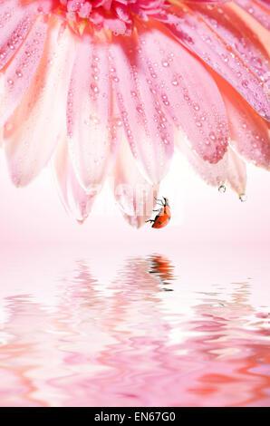 Belle fleur rose avec une coccinelle sur son reflefted pétales dans l'eau rendue Banque D'Images