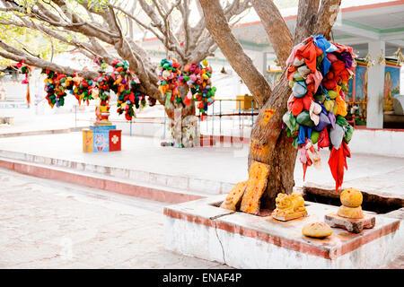 Tiens les arbres et sanctuaires en Durgadevi Anegundi, Temple.
