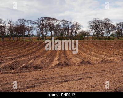 Un champ fraîchement labourés avec sillons. Banque D'Images