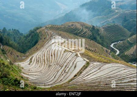Les terrasses de riz de Longsheng Longji, champs en terrasses, près de Guilin, dans la région autonome du Guangxi, Banque D'Images
