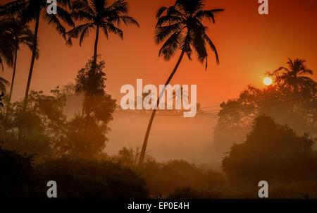 Palmiers silhouetté contre un brouillard lever du soleil dans le village de Tamborim, Goa, Inde Banque D'Images