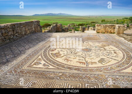 Volubilis, ancienne ville romaine dans la région de Zerhoun montagnes, près de Fès. Vue de la mosaïque dans Orpfeus chambre. Maroc