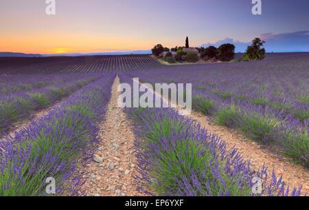 Champ de lavande au coucher du soleil à Valensole, Provence, France Banque D'Images