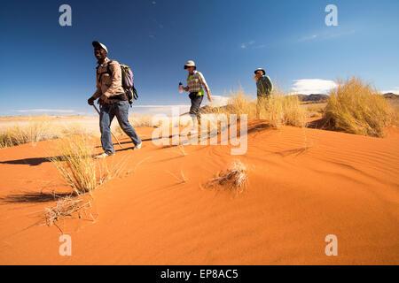 L'Afrique, la Namibie. Tok Tokkie Trails. Les randonneurs à pied dans le sable du désert rouge.
