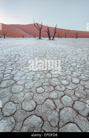 Tôt le matin dans la région de Dead Vlei, un marais salant en Namibie. Banque D'Images