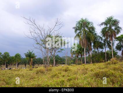 Panama, province de Darién, Filo Del Tallo, Darien National Park Banque D'Images