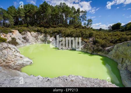 Le Lac de bain du diable à Wai O Tapu Wonderland thermique près de Rotorua a teinté vert livide et soufre dissous Banque D'Images