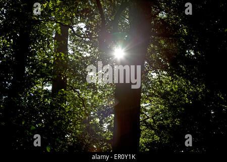 Rayons de soleil à travers les arbres, faire une, sur l'objectif de l'appareil photo Banque D'Images