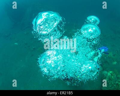Un plongeur de bulles remontent à la surface, d'expansion et de briser de nouveau. Photo prise lors d'une plongée Banque D'Images