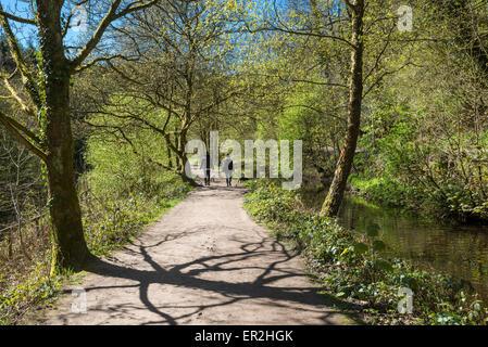 Deux personnes promènent leurs chiens à Etherow country park, Stockport, Angleterre, sur une journée de printemps Banque D'Images