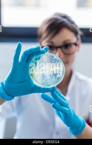 Mains tenant une plaque de culture des tests pour détecter la présence de bactéries Escherichia coli en regardant la résistance aux antibiotiques, de la biologie et au Centre de recherche en santé de l'Hôpital Universitaire, Limoges, France.