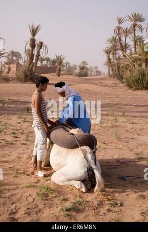 En chameau dans le désert près de M'Hamid, Maroc, Afrique Banque D'Images