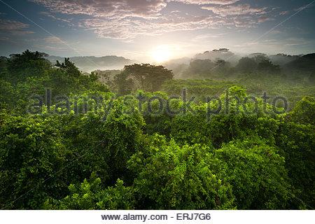 Superbe lever de soleil dans la forêt tropicale du parc national de Soberania, République du Panama. Banque D'Images