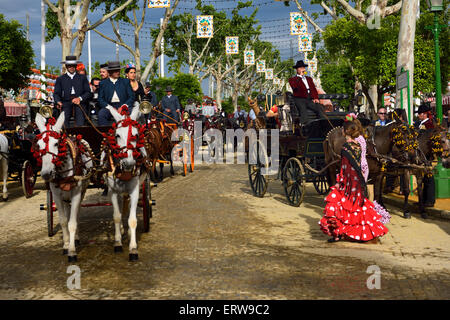 Cheval et mule calèches sur rue pavée, Foire d'Avril de Séville Banque D'Images