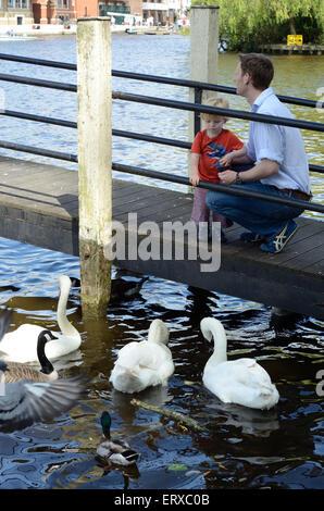 Un père et son jeune fils nourrir les cygnes, canards et oies sur la Tamise. Banque D'Images