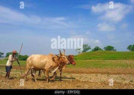 Agriculteur labourant la terre; Kaushambi à 60 km d'Allahabad Uttar Pradesh; Inde; Banque D'Images