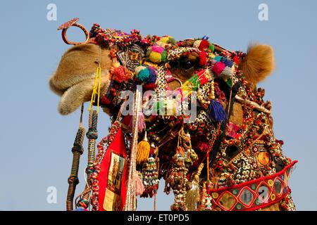 Chameau décoré à Pushkar Rajasthan Inde; juste; Banque D'Images