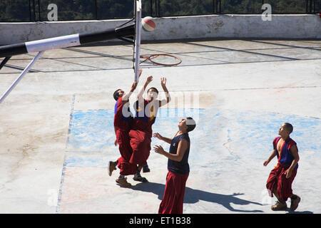 Moines tibétains portant des vêtements de couleur marron jouant au basket-ball sur le terrain; Dulanji; l'Himachal Pradesh en Inde;