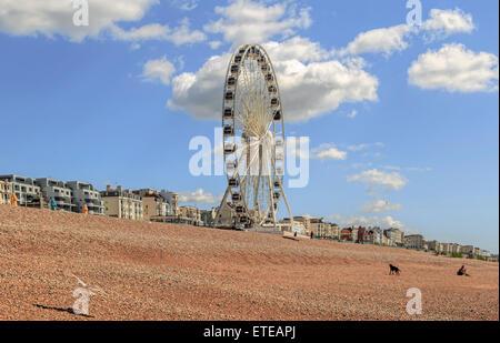 Vue sur la roue de Brighton (grande roue) sur une journée ensoleillée au printemps, le front de mer de Brighton, East Sussex, Angleterre, Royaume-Uni.
