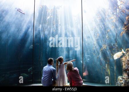 Fille pointant un poisson alors que sa mère et père regardant fish tank Banque D'Images