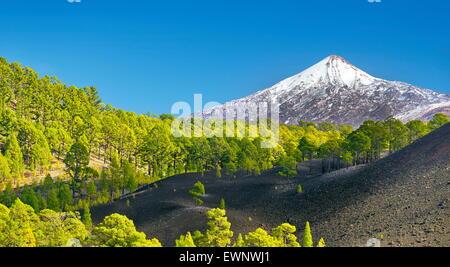 Le Parc National du Teide, Tenerife, Canaries, Espagne Banque D'Images