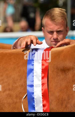 Mettre sur la ceinture de championnat au Limousin champion Royal Welsh Show, Builth Wells, le Pays de Galles. Banque D'Images