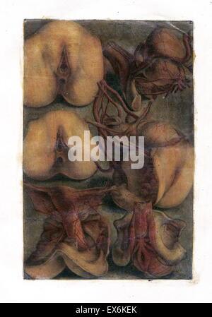 Étude anatomique par Jacques Gautier d'Agoty 'pot générale des viscères' Paris 1752. Banque D'Images