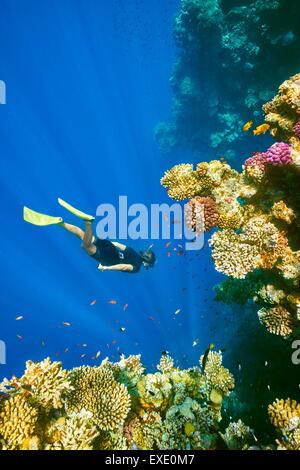 Sous-marine, plongée avec tuba femme Coral Reef, Trou Bleu près de Dahab, Mer Rouge, Egypte Banque D'Images