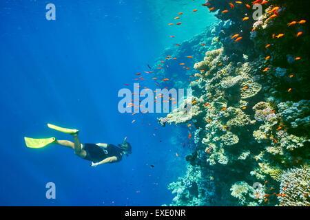 Mer Rouge, Egypte - femme en apnée sous l'eau, les récifs coralliens, Trou Bleu près de Dahab Banque D'Images