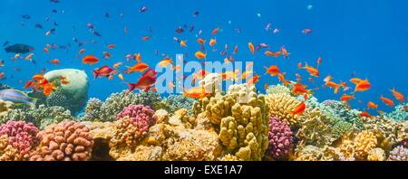 Mer Rouge, Egypte - sous-vue de poissons et la barrière de corail Banque D'Images